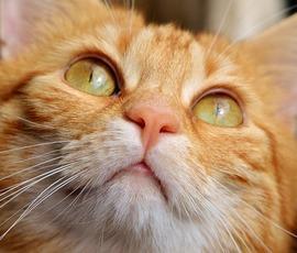 Петербургских котов оставили без тайского корма
