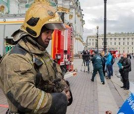 Пострадавшие при пожаре в Эрмитаже коты обрели новый дом
