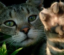 Ученые выяснили: кошки — физики, а коты — лирики