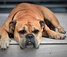На Авито продают ворованных собак