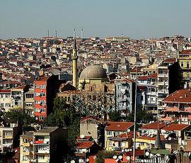 В Турции засекли комаров-переносчиков вируса Зика