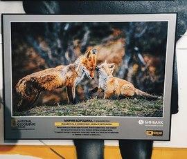 Фотовыставка авторов National Geographic проходит в Петербурге