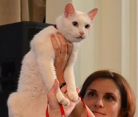 Разжиревшего кота-предсказателя Ахилла перед ЧМ-2018 посадят на диету