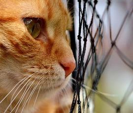 Петербургские рыжие коты ищут настоящих мужчин