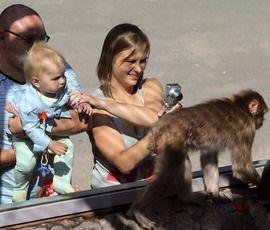 Кормить, но не тискать: как спасти зверей из контактных зоопарков