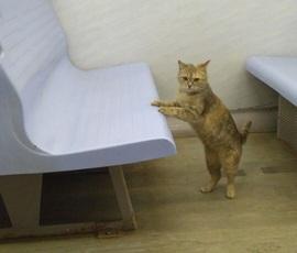 Кот-путешественник замечен на петербургской электричке