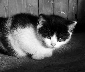 Петербуржец устроил мордобой ради котенка