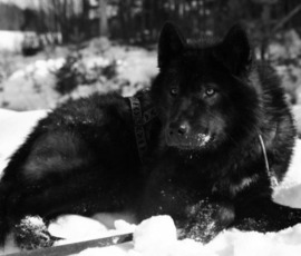 В Петербурге задержан похититель редкой собаки