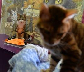 В пятницу петербуржцам бесплатно раздадут котов
