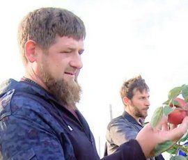 Кадыров пообещал Петербургу чеченские яблочки