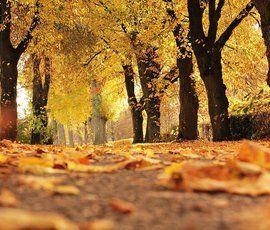 1 ноября стало первым с конца сентября солнечным днем в Петербурге