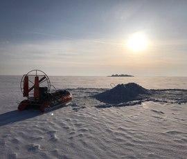 Экологи объяснили, почему петербуржцы перестали встречать тюленей