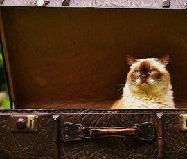 """""""Прорвавшийся"""" в Швецию за котом обиженный россиянин получил месяц тюрьмы"""