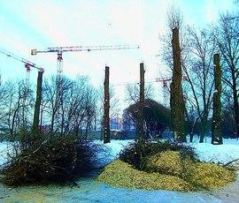 Активисты в Петербурге ищут деревья-столбы