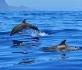 """Во Владивостоке """"Тотальный диктант"""" зачитали местным дельфинам"""