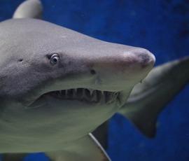 Пляж в Таиланде закрыли после нападения акулы на туриста