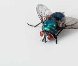 Ученые узнали, почему мухи распускают слюни