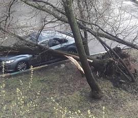 При урагане в Москве пострадали 17 человек