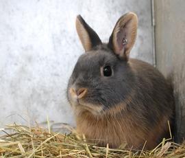 В Мурино две женщины порезали приятеля, отомстив за убитого кролика