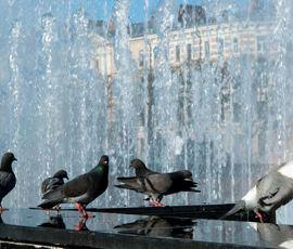 В среду в жителей Северной столицы ожидается жара и кратковременные дожди