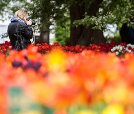 Цветы и балет: на Елагином острове отмечают праздник тюльпанов