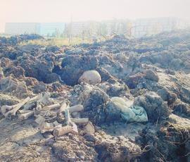 """Строительство """"дороги на костях"""" в Шушарах остановили"""