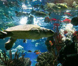 Променявшую Мальдивы на Петербург черепаху Эльзу показали зрителям