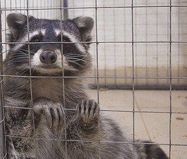 Животные в Комарово сменят ресторан на зоопарк
