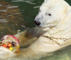 Символ Ленинградского зоопарка Услада завтра отметит 30-летие