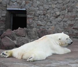 Белая медведица Услада отметила юбилей ледяным тортом