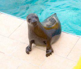 Петербургские друзья тюленей попросят Минприроды РФ запретить ловлю рыбы на лежбищах