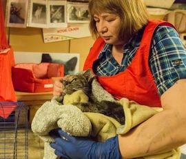 Вылеченных после пожара в Эрмитаже котов покажут на выставке
