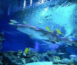 Петербуржцы прислали тысячу вариантов имен для акул в океанариуме