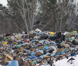 Петербург привезет в Ленобласть миллион тонн отходов