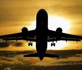 Птица задержала в Петербурге самолет до Саратова