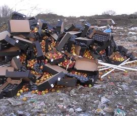 В городе Остров уничтожили 20 тонн яблок