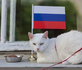 Эрмитажный Ахилл стал самым популярным котиком России