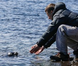 За мягкую зиму нерпы Балтики могут расплатиться гибелью