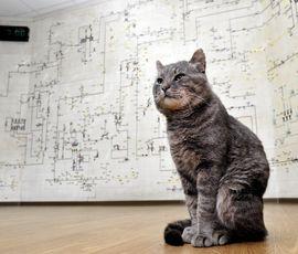 Котики заполонили Петербург в преддверии года собаки