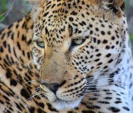Самка гепарда родила рекордное количество детенышей в зоопарке США