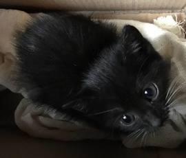 Хозяевам котенка-подкидыша из Исаакиевского собора обещают удачу