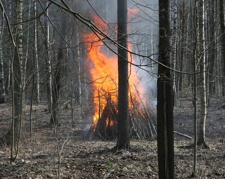 Петербург окажется в кольце природных пожаров во время ЧМ-2018?