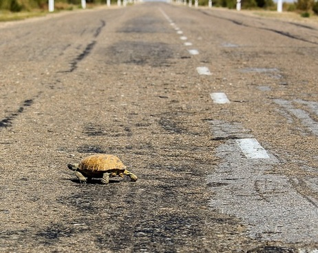 Петербуржцы не любят домашних черепах