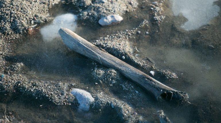 Обещанное исследование воинского захоронения в Шушарах, где в 2017-м начали строить дорожную развязку, так и не было произведено. По информации