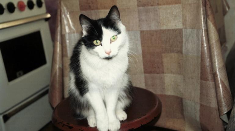 В квартирах нашли смертельную опасность для кошек