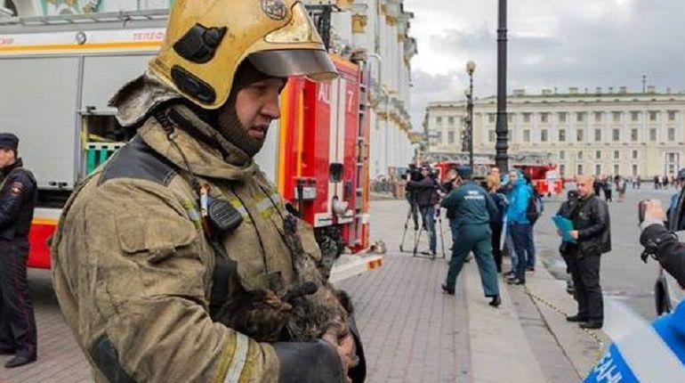 Акция по пристройству бездомных кошек и котов прошла в Петербурге. На этот раз ее участниками стали три кота из Эрмитажа, пережившие пожар в подвале музея.