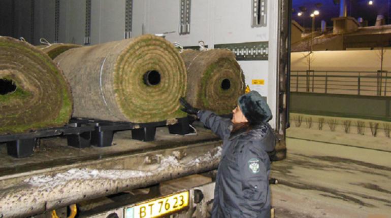 ВПетербурге новый газон для стадиона прошёл фитосанитарный контроль