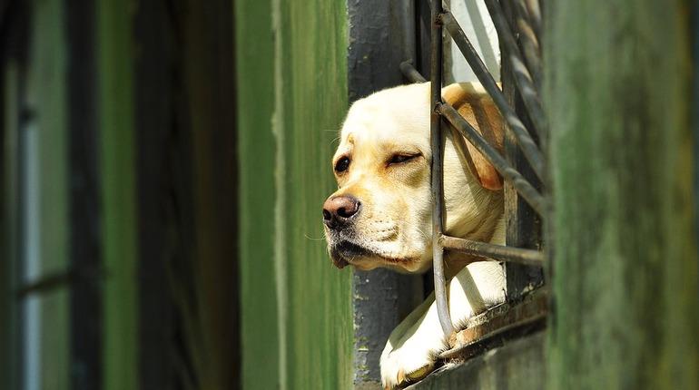 К Чемпионату мира готовят тюрьмы для животных