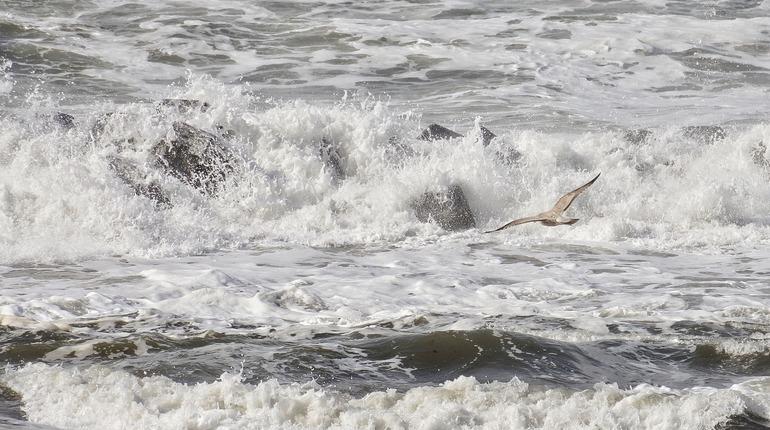 Спасатели будут искать моряков с судна «Восток» на берегу
