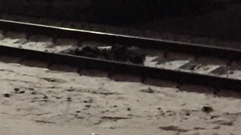 Поезд сбил человека насевере Петербурга: тело оставили нарельсах
